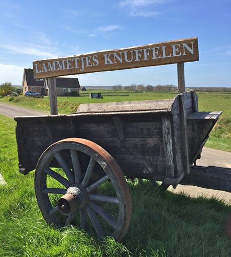Lämmchen streicheln auf Texel