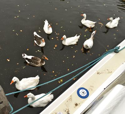 Besuch am Hausboot