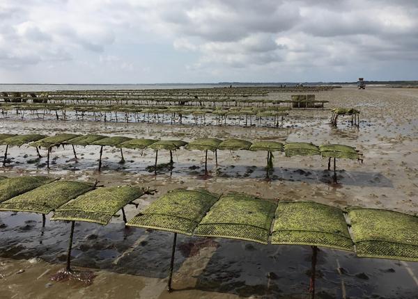 Austernbänke auf Sylt