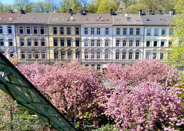 Kirschblüte in Wuppertal - Blick von der Schwebebahn aus