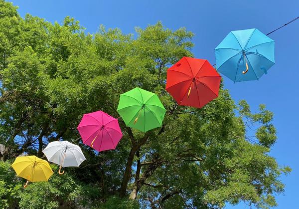 Bunte Schirme vor frischem Grün